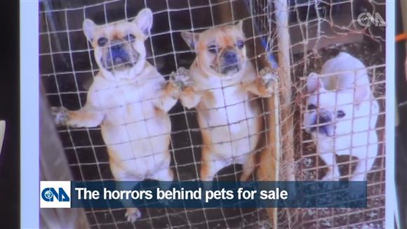 The horrors behind pets for sale