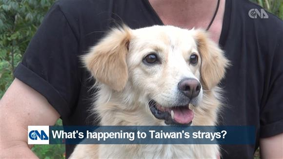What is happening to Taiwan'sstrays?