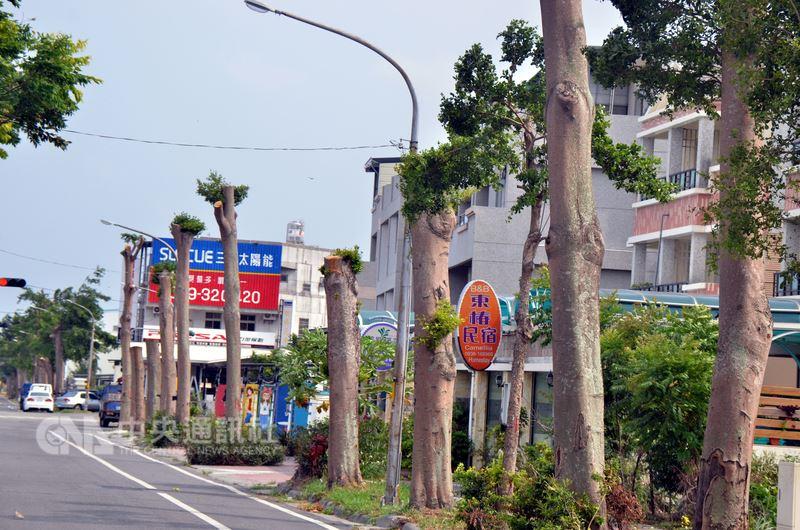 台東市又見「斷頭樹」,興安路2公里長,上面數百棵5層樓高小葉欖仁被砍成高矮不一,高的2層樓,矮的不到一樓高,有的留下幾根樹枝,有的則是光禿禿的一根樹幹。中央社記者盧太城台東攝 107年6月14日