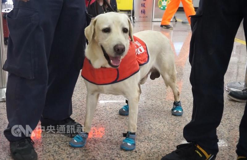 緝毒犬賴莉今年7歲,投入緝毒工作6年,不定期在機場、港口值勤,防止毒品遭夾帶入境。中央社記者趙麗妍攝 107年8月18日
