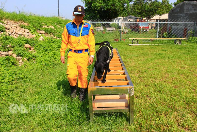 台中市政府消防局民國105年1月成立「Go Go搜救犬隊」,今年2月培訓完成、投入搜救工作,近日強化搜救犬訓練,將在花博活動中執行訓練任務,不只磨練社會化過程,也可在緊急狀況時投入搜救工作。中央社記者蘇木春攝 107年8月18日