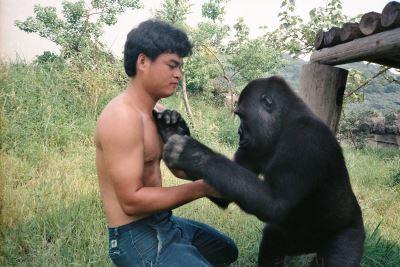 保育員憶當年 給金剛猩猩寶寶更多祝福