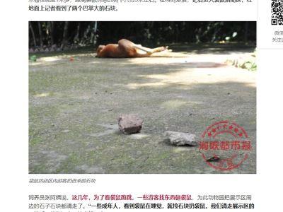 陸客丟石頭砸死袋鼠 只為看牠跳