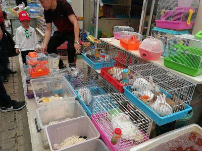 人口嚴控不停歇 上海花鳥市場連關3座