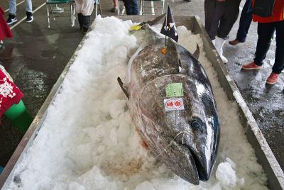 宜蘭第一黑鮪 211公斤189萬賣出