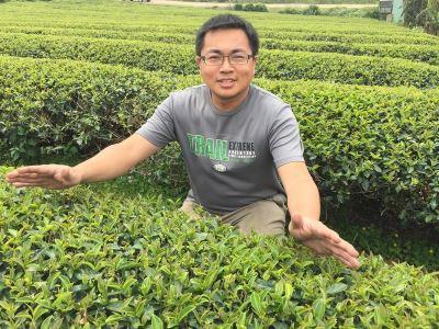 賣過農藥肥料  周業斌返鄉種出有機茶