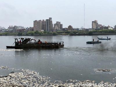 溶氧低大量魚群死亡  北市清理近28噸