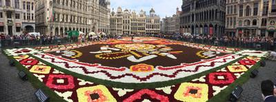 歐洲熱浪摧花 布魯塞爾花毯節也受害