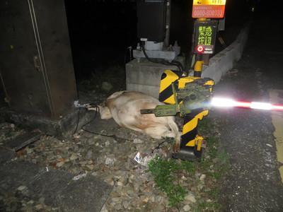 台鐵莒光號深夜撞上4頭牛  飼主涉公共危險罪