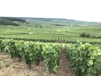 暑熱有利葡萄 法國業者看好2018年份香檳