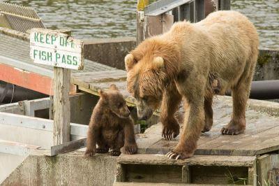 保育熊同時維持距離 歐洲國家有經驗