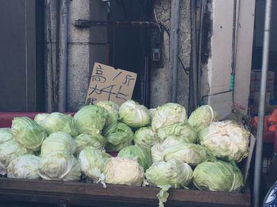 災後復耕高麗菜種植超量 農糧署憂價格下跌