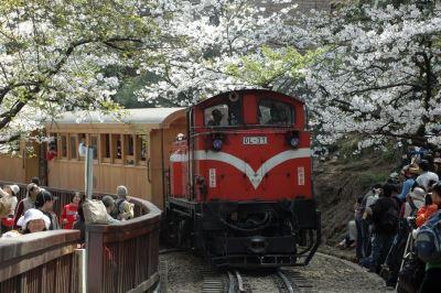 阿里山森林鐵路驚豔國際 CNN撰文介紹