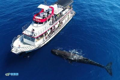抹香鯨近距離換氣噴水  賞鯨客一身濕