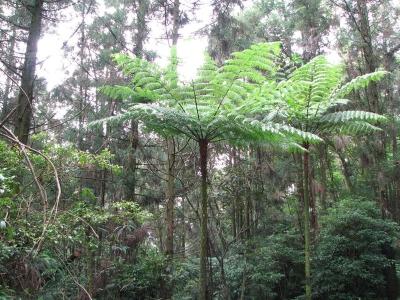 巴西森林砍伐減緩 但逾50名環保人士遇害