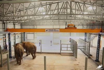 印度設立首間大象醫院  盼減少生存威脅