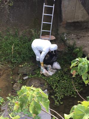 防堵禽流感疫情 追查嘉義野溪遭棄雞屍來源