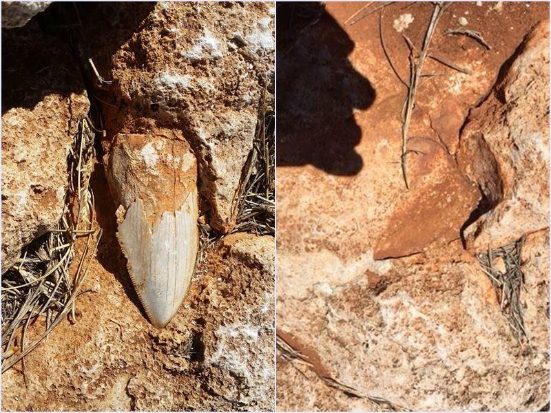 一顆巨齒鯊的牙齒化石,從澳洲偏僻的世界遺產地區的秘密地點失蹤,野生動物保育官員盼能將它尋回。圖為藏匿在石堆的巨齒鯊牙齒化石遭竊前後對照圖。(圖取自西澳省野生動物園臉書www.facebook.com/WAParksWildlife)
