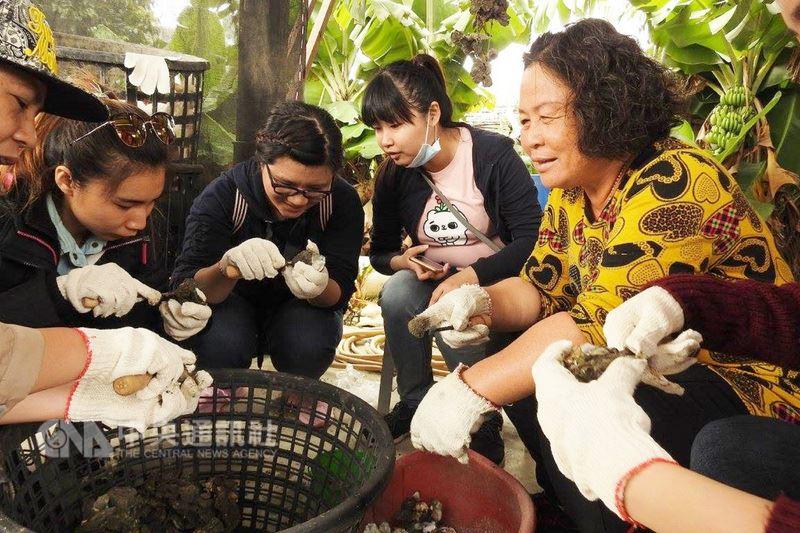 出身台南漁村的婦人吳麗惠(右)從小練就熟練剝蚵技術,以近60歲的年紀接受社區發展協會培訓,成為專業的漁村體驗導覽員。(台南就業中心提供)中央社記者楊思瑞台南傳真  107年3月14日