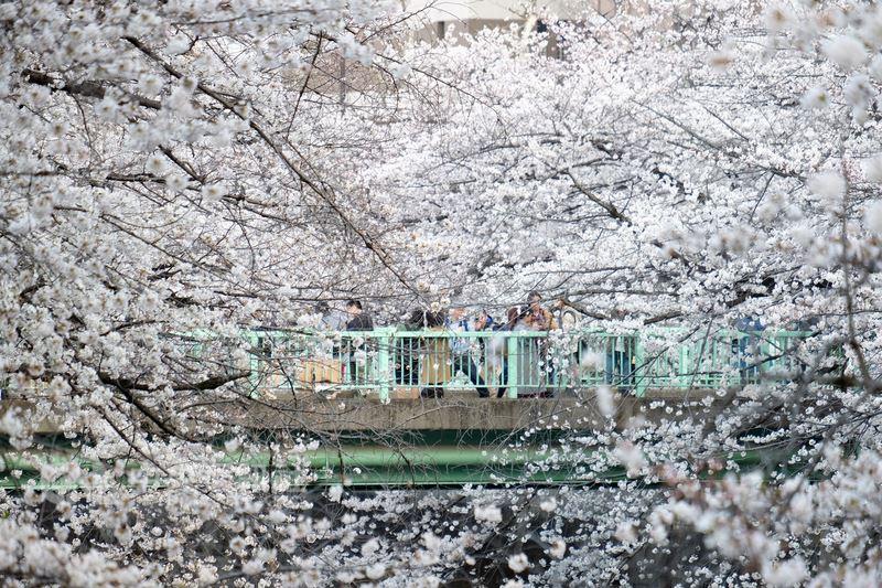 橫跨日本東京神田川的小橋,時常人滿為患,駐足拍攝櫻花美景。中央社記者黃名璽東京攝  107年3月26日