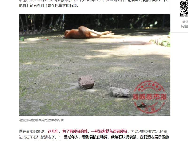 中國大陸福州動物園發生袋鼠遭遊客投擲石塊砸死事件。(圖取自海峽都市報微信公眾平台mp.weixin.qq.com)