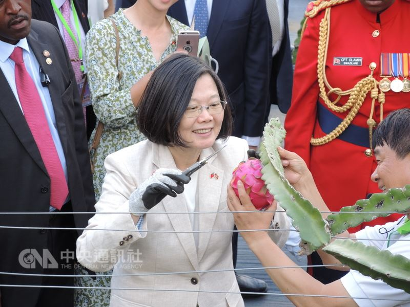 總統蔡英文在史瓦濟蘭時間19日下午參觀台灣技術團,她親手摘下一顆技術團種植的火龍果,並大讚「真的比在台灣的好吃」。中央社記者葉素萍攝 107年4月20日