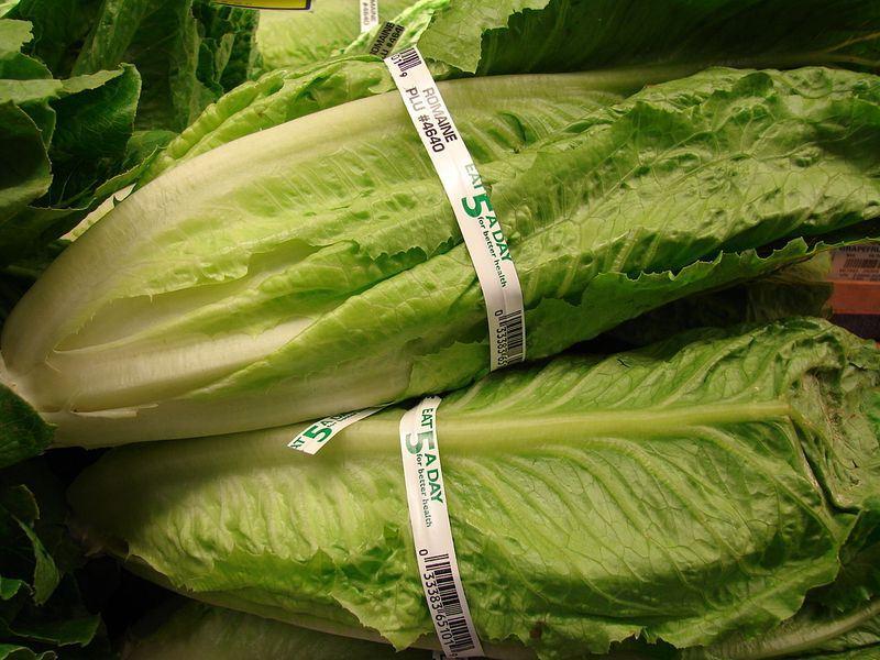 全美16州爆發大腸桿菌疫情,美國疾病管制暨預防中心(CDC)20日呼籲民眾不要食用蘿蔓萵苣。(圖取自維基共享資源,作者Forest & Kim Starr,CC BY 3.0)