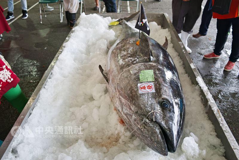 宜蘭今年第一尾黑鮪魚26日在南方澳拍賣,重達211公斤的黑鮪魚最後由基發鮪魚館老闆陳基發以每公斤新台幣9000元、總價達189萬9000餘元得標。(民眾李忠衛提供)中央社記者王朝鈺傳真 107年4月26日