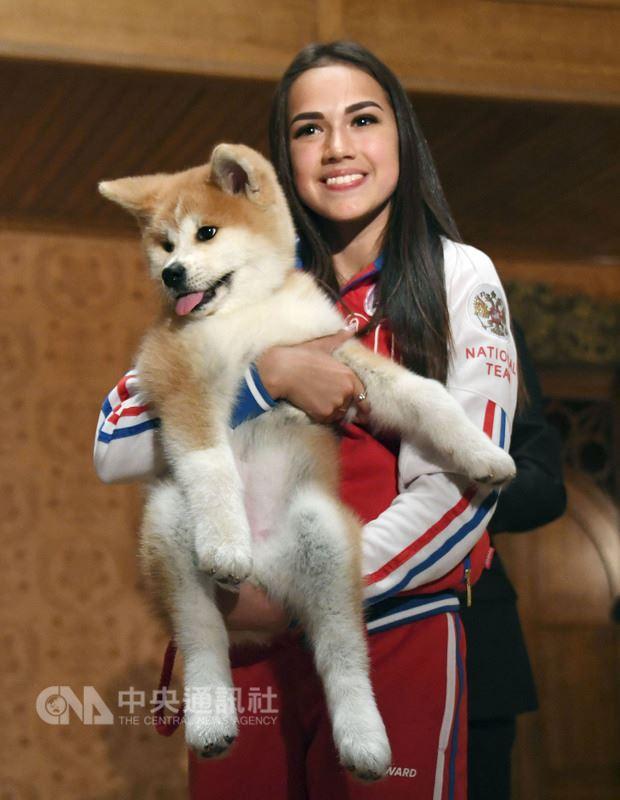 在日本首相安倍晉三的見證下,平昌冬季奧運女子個人花式滑冰金牌得主、俄羅斯女將薩奇托娃今天如願獲贈一隻秋田犬。(共同社提供)中央社 107年5月26日
