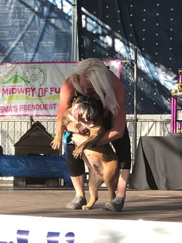 美國舊金山灣區23日舉辦2018年世界最醜狗狗大賽,9歲大的英國鬥牛犬莎莎奪得冠軍。(圖取自索諾馬-馬林露天遊樂場推特 twitter.com/SonomaMarinFair)