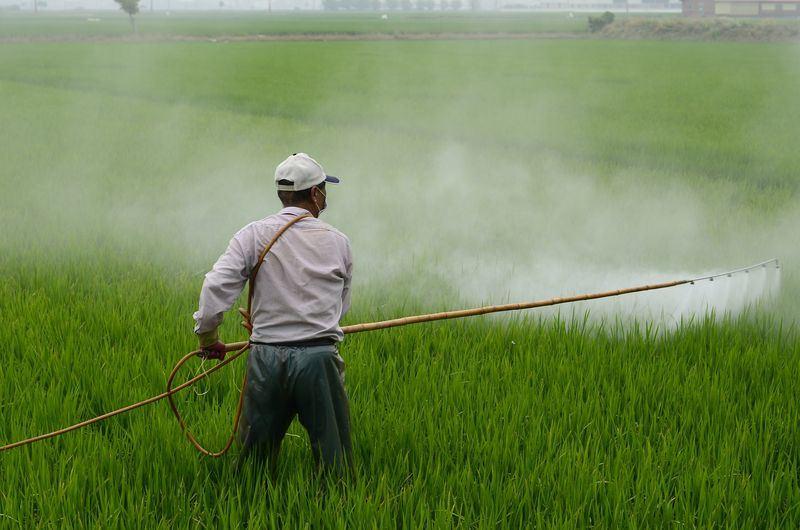 年年春目前在台灣是核准使用的除草劑,也是台灣用量最大的除草劑,106年用量高達1464公噸。圖僅為示意。(取自Pixabay圖庫)