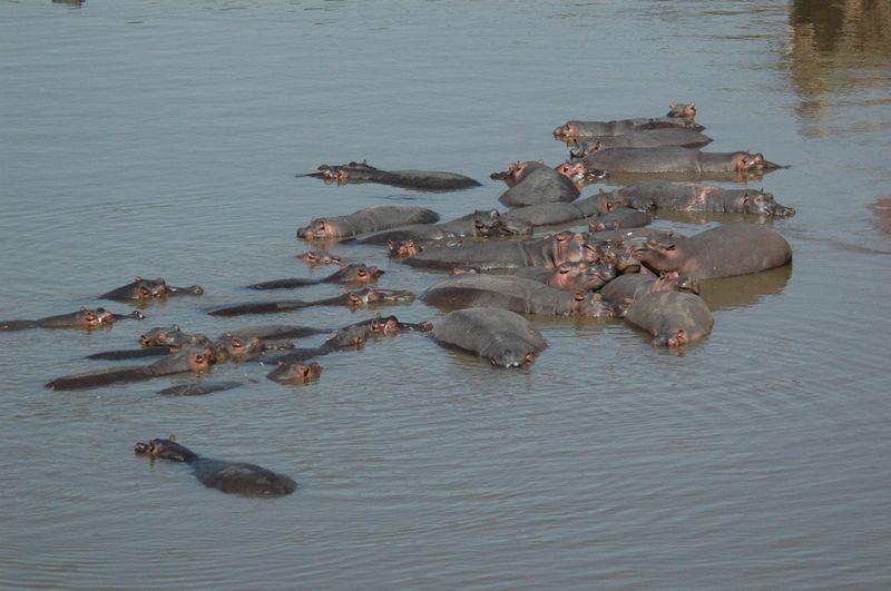 肯亞河馬攻擊旅客事件,台旅客一死一傷,該旅行團後續還發生車禍,造成15人傷。(圖取自肯亞野生動物管理局臉書www.facebook.com/KenyaWildlifeService)