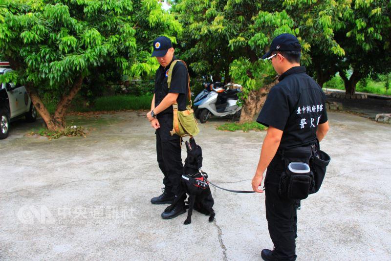 台中花博11月登場,台中市政府警察局成立的警犬隊也加強備戰訓練,訓練有素的警犬無論在維安、緝毒等工作上,都是警力生力軍,可協助員警更有效執行勤務。中央社記者蘇木春攝 107年8月18日