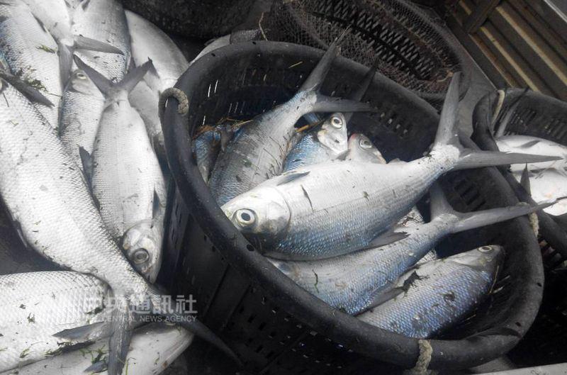農委會更新23日起受豪雨影響造成的農業災情,截至29日傍晚5時,農業產物損失累計新台幣7億3739萬元,漁業損失最大。(中央社檔案照片)