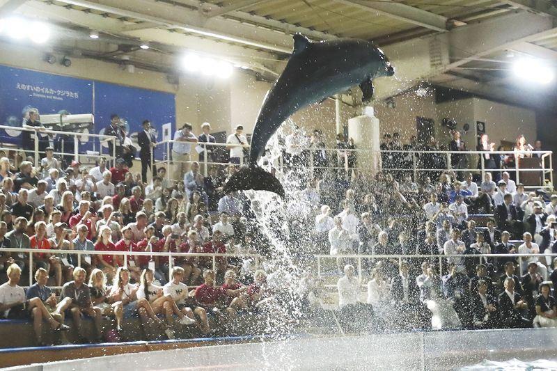 日本帆船協會9日在日本江之島舉行的世界盃帆船賽開幕式上,安排海豚表演,讓部分外國選手感到震驚。(檔案照片/共同社提供)