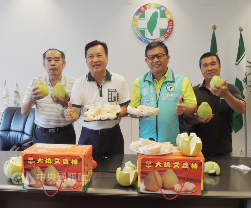 台中大坑地區的文旦柚盛產,民進黨籍台中市議員曾朝榮(左2)、李天生(右2)14日陪同大坑柚農舉辦行銷品嚐會,呼籲各界踴躍採購。中央社記者郝雪卿攝 107年9月14日