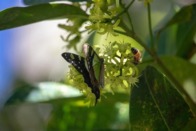 研究指出,全球昆蟲正急速邁向滅絕,密集農業是昆蟲減少的主因。(圖取自Pixabay圖庫)