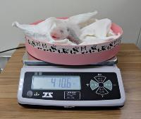 圓仔變大粒 貓熊寶寶體重增倍
