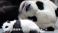 貓熊母女團圓 未來一週關鍵