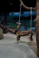 圓仔的木馬玩具