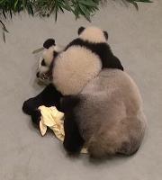 圓仔和媽媽搶毛巾