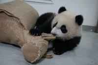 迎馬年  圓仔有新玩具小毛驢(3)