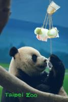 慶端午 圓仔開心吃冰粽(2)