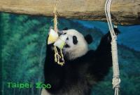 慶端午 圓仔開心吃冰粽(1)