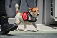警犬進駐世大運選手村 小型犬也上陣