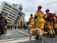 搜救犬加入雲門翠堤大樓救援行列