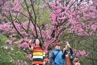 陽明山花季開幕  民眾開心自拍