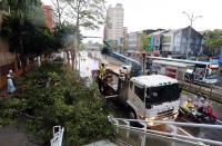颱風瑪莉亞來襲  零星路樹倒塌