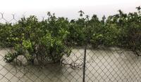 雨彈強襲南台灣 屏東瓜果類農損較嚴重
