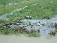 豪雨襲高雄 農損逾初估已逾300公頃